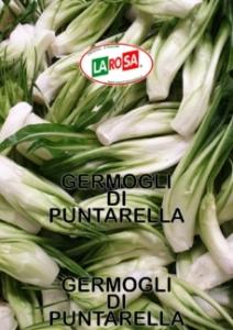 10520Germogli Di Puntarella