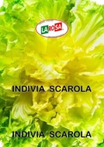 10530Indivia Scarola