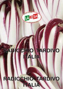 10530Radicchio Tardivo Italia