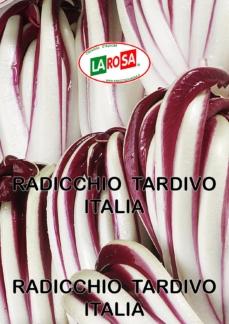 Radicchio Tardivo Italia