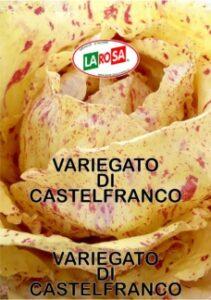 10558Variegato Di Castelfranco