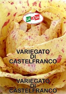 Variegato Di Castelfranco