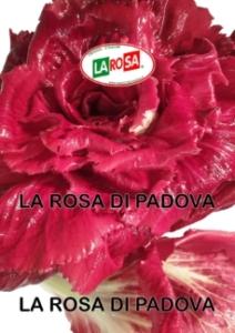 La Rosa Di Padova