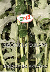 10566Brocollo Fiolaro